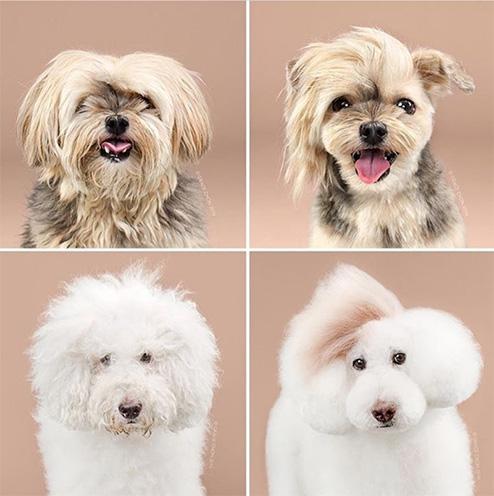 hairdresser canine brasserie Brasov Romania